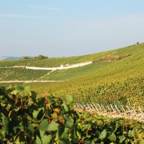 jean-bouchard-vignes1