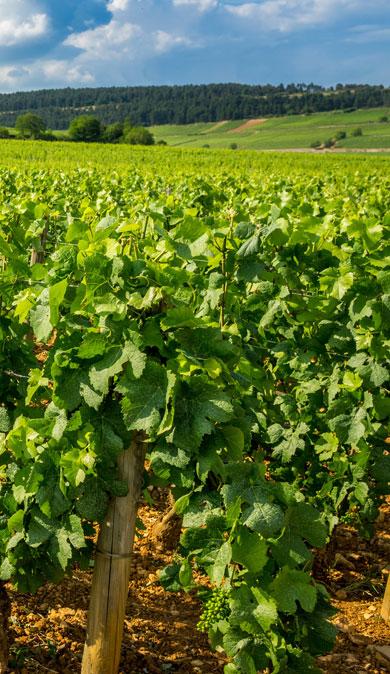 millesime-2014-bourgogne-jean-bouchard