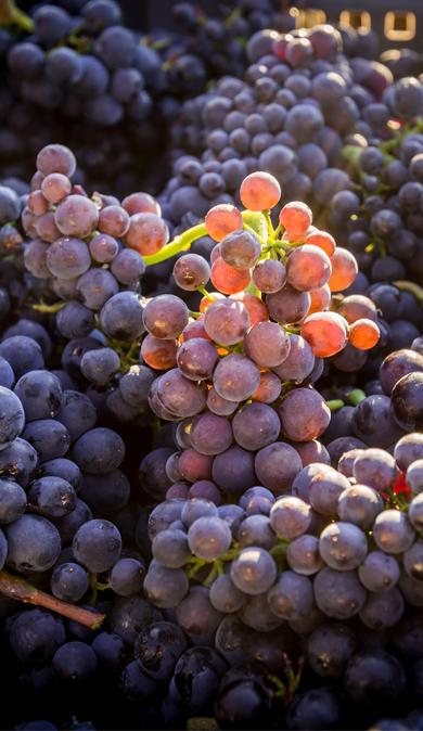 millesime-2015-bourgogne-jean-bouchard